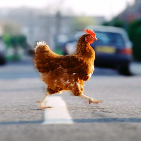 ¿Por que el pollo cruzo la calle?